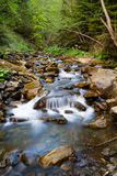 Forest river. Flowing between rocks royalty free stock photo