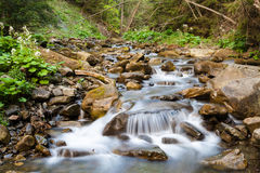 Forest river. Flowing between rocks royalty free stock images