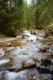 Forest river. Flowing between rocks royalty free stock photos