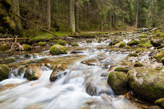 Forest river. Flowing between rocks covered with moss stock photos
