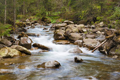 Forest river. Flowing between rocks and pines stock photography