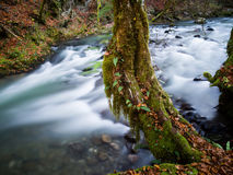 Forest river. Flowing water fast running river nature natural environment long exposure Royalty Free Stock Image