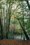 The forest and the river. The river flows near the forest royalty free stock photography