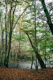 The forest and the river. The river flows near the forest stock images
