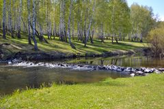 Forest river. And green grass Stock Images