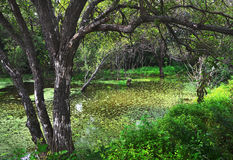 Forest river, green marsh Stock Image