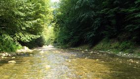 Free Forest River In Hyrcanian Forests Of Iran Stock Photos - 159739593