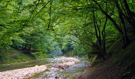 Free Forest River In Hyrcanian Forests Of Iran Stock Photography - 159739722