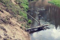 Forest river landscape Royalty Free Stock Images