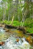 Forest river Stock Images