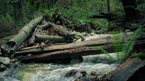 Forest River With Log Over selvagem ele