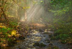 Forest river and mist Royalty Free Stock Photos