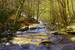 Forest and river. Royalty Free Stock Photo