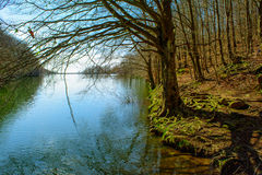 Forest and river. Royalty Free Stock Image