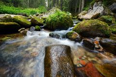 Forest river Royalty Free Stock Image