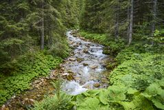 Forest River in the Mountains in Austria stock photography