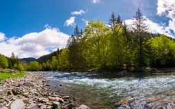 Forest river in mountains. Lovely springtime countryside scenery Stock Photography