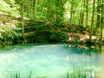 Forest river in mountains, nature landscape with trees and river Stock Photos