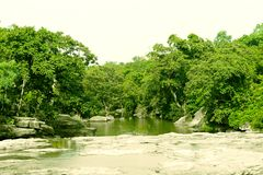 Forest river natural green environment. Beauty royalty free stock photography
