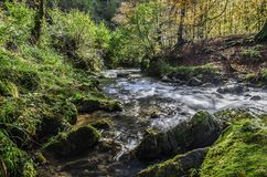 Forest river Royalty Free Stock Photography