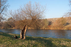 Forest. And river near city of Nis, Serbia Stock Photography