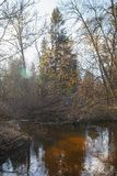 Forest River nella molla in anticipo al tramonto immagine stock