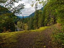 Forest River olímpico imagen de archivo libre de regalías