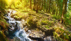 Forest and river Royalty Free Stock Images