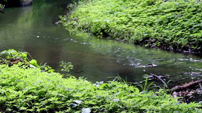Forest River. Peaceful mountain stream. Forest River stock video