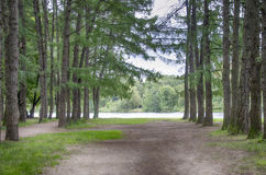 Forest river. Forest by the river with pine trees Royalty Free Stock Image