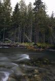 Forest River pur Images libres de droits
