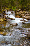 Forest river. Quickly Forest River flowing among mossy stones and conifers royalty free stock photos