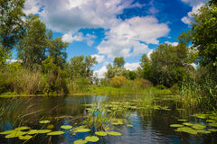 Forest river. Quiet forest river with reeds and grass on water stock photo
