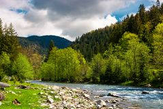 Forest river with rocky shore in mountains. Lovely countryside scenery in springtime Royalty Free Stock Image