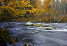 Forest river ,Russia. Autumn forest, autumn landscape, forest river, Russian nature ,walk through the forest, reserved forest royalty free stock photography