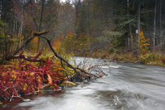 Forest river ,Russia. Autumn forest, autumn landscape, forest river, Russian nature ,walk through the forest, reserved forest royalty free stock images