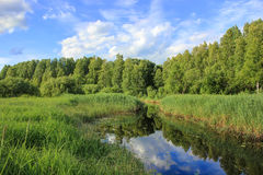 Forest river, Russia Stock Image