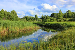 Forest river, Russia Royalty Free Stock Image