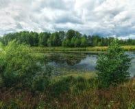 Forest River Skogsmarkmyr Arkivbilder