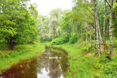 Forest and river.. Forest and small river at cloud summer day Royalty Free Stock Photos