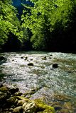 Forest river source scene, Croatia Royalty Free Stock Images