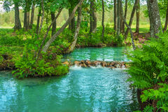 On forest river source Royalty Free Stock Images