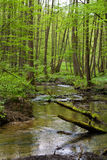 Forest and river in spring Royalty Free Stock Image