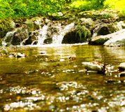 Forest river spring day Stock Image