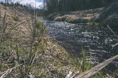 Forest river in spring - vintage film look. Forest river in spring. natural environmental detail view in latvia - vintage film look Royalty Free Stock Image