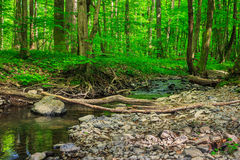 Forest river with stones and moss Stock Photos