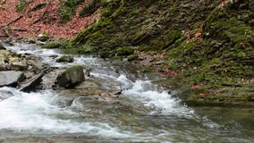 Forest river with stones and moss. Mountain river with stones and moss in the forest near the mountain slope stock footage
