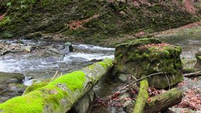 Forest river with stones and moss. Mountain river with stones and moss in the forest near the mountain slope stock video