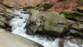 Forest river with stones and moss. Mountain river with stones and moss in the forest near the mountain slope stock video footage