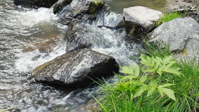Forest river with stones stock video